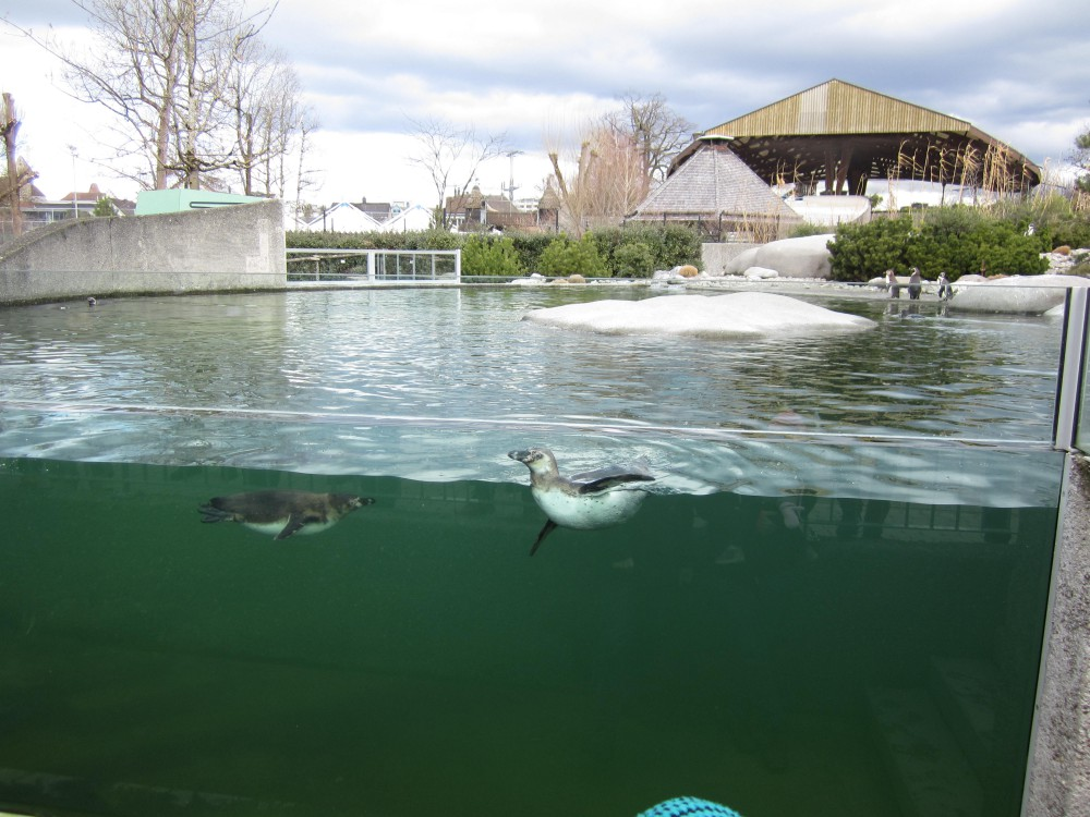 Kundenanlass Knie Kinderzoo in Rapperswil SG : vom 13.03.2019